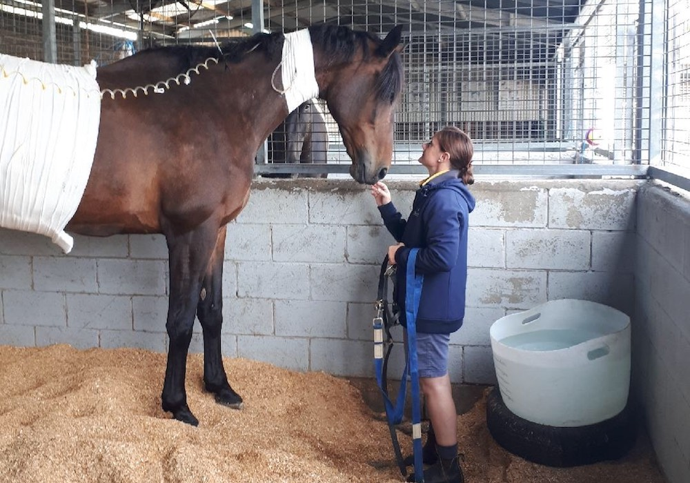 Hospitalisation and Intensive Care, Morphettville Equine Clinic (Hills Clinic), South Australia